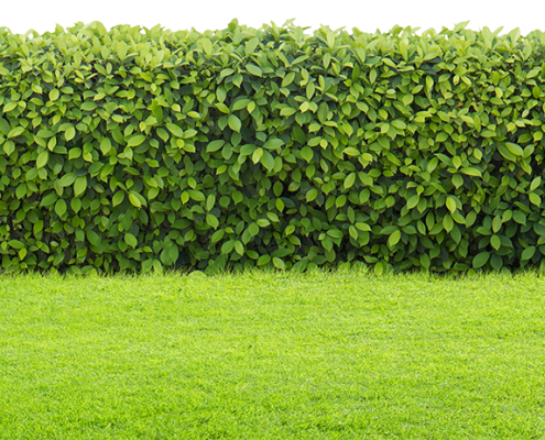 How to keep a green lawn in centurion